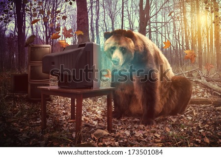 A wild brown bear is watching television in the woods with a crow on broken tv's for an entertainment, humor or surreal concept. - stock photo
