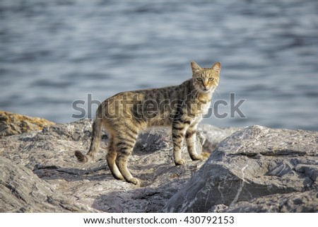 A wild domestic cat looking to camera. Cats resting on the beach