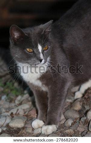 A Wild Feral Cat Hiding Behind a Pile of Rocks - stock photo