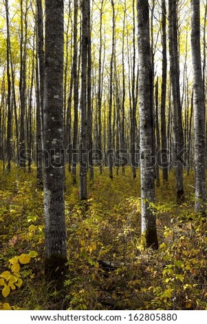 A wild forest landscape in early autumn showing the tree leaves just turning fall colors - stock photo