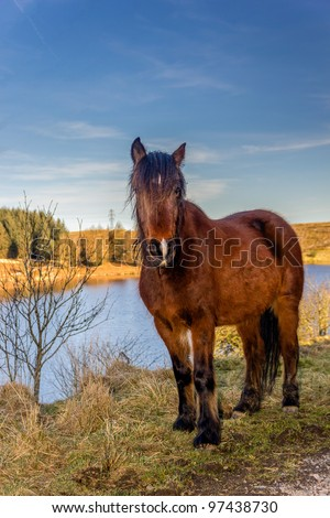 A wild horse stood on the bank of a calm lake illuminated by the yellow of the late afternoon sun