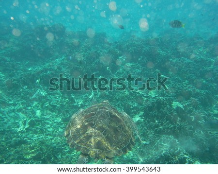 a wild sea turtle at Similan Islands National Park, Thailand
