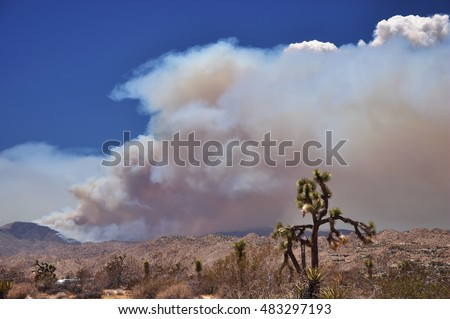 A wildfire rages in the high desert near the towns of Yucca Valley and Joshua Tree in southern California.
