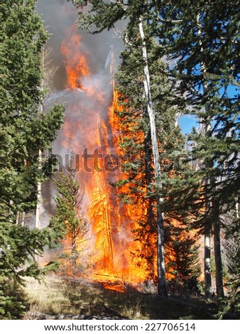 A wildfire spreads into the forest canopy. - stock photo