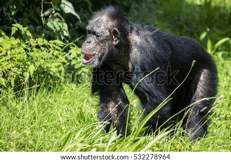 A wildlife shot of a monkey in the wild
