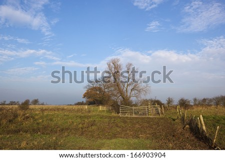 a willow tree with an old metal gate on the bank of a canal under a blue sky in winter