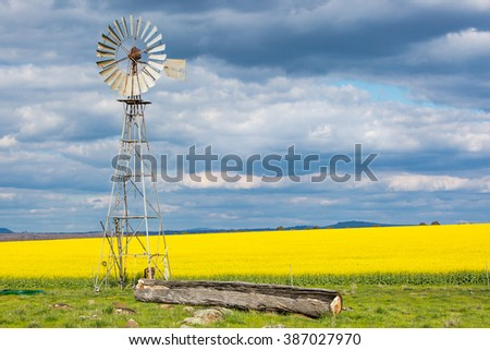 A windmill and canola fields shine on a clear sunny day near Smeaton in the Victorian goldfields, Australia - stock photo