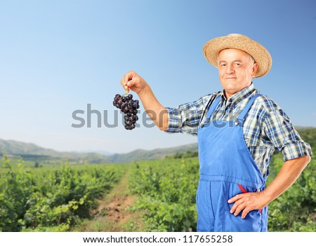 A winemaker holding a cluster of wine grapes with a vineyard in the background - stock photo