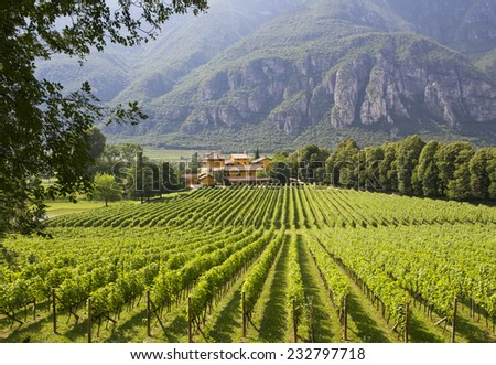 A winery in Trento. Wine production is one of the main industries in this area. - stock photo