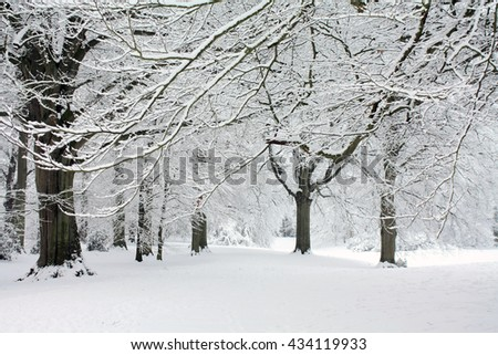 A winter forest with frozen trees and an icy pond