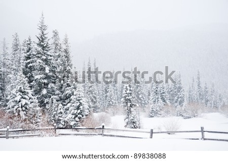 A winter landscape in the Colorado wilderness