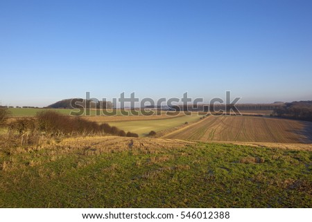 a winter landscape in the yorkshire wolds with crops and pheasant cover near woodlands under a clear blue sky