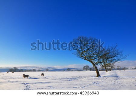 A winter landscape in Yorkshire, UK. - stock photo