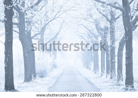 A winter landscape with white trees and snow on the road with fog in the background