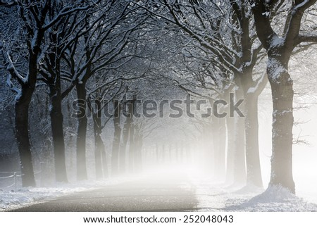 A winter lane in sunlight
