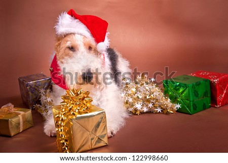 A wire fox terrier dressed up for Christmas.