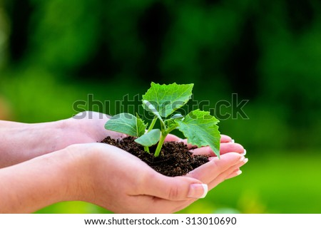 a woman holding a small plant in hand. symbolfotoo for nature and growth - stock photo