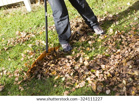 A woman is raking leaves in the backyard in the autumn time. She is holding a rake and trying to collect all the birch leaves.