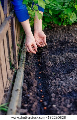 A woman planting seeds in the garden - stock photo