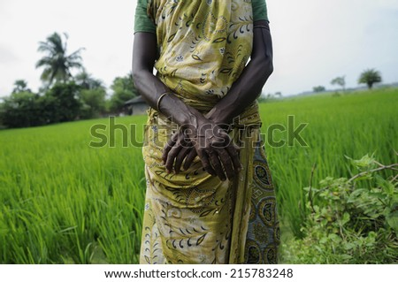 A woman worker in a paddy field in India. - stock photo