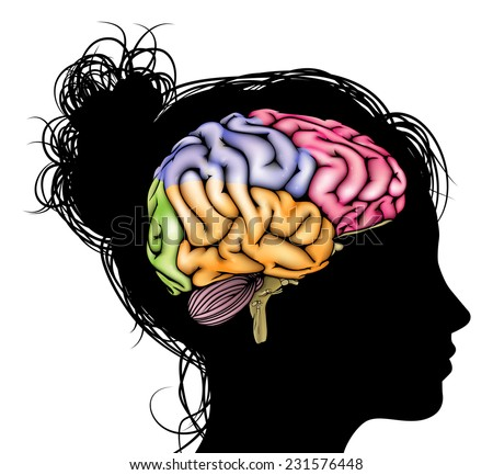 A womans head in silhouette with a sectioned brain. Concept for mental, psychological, brain development, learning and education or other medical theme - stock photo