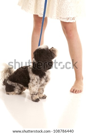 A womans legs and a dog on a leash. - stock photo