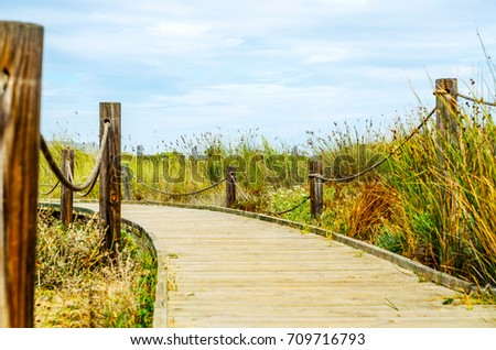 a wooden boardwalk in the dunes leading to the sandy beach, the path by the sea, plants on the dunes, tourism