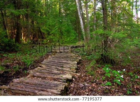 a wooden boardwalk through the forest