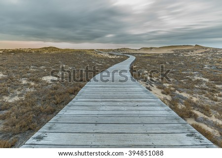 A wooden path meanders through the sand dunes of Plum Island, MA.   - stock photo