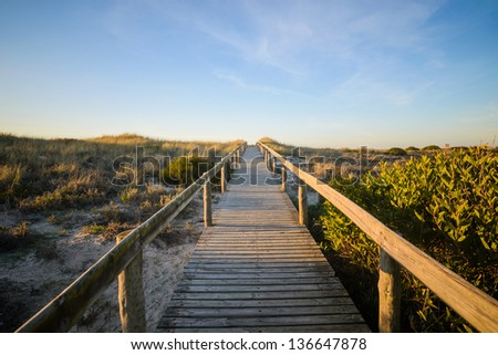 A wooden walkway marking the path to a beach, surrounded by green vegetation, bathed by a golden sun. - stock photo