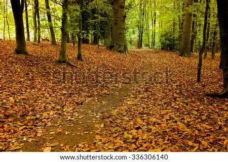 A woodland foot path through the fallen autumn leaves in Surrey, UK.