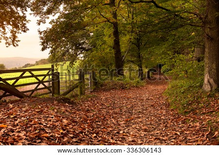 A woodland footpath covered in autumn leaves in the early morning.  The photo take was taken in the Surrey Hills, UK in the month of October.
