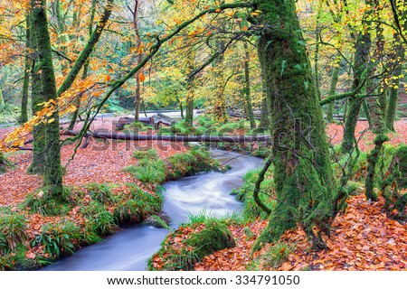 A woodland stream at Golitha Falls on Bodmin Moor in Cornwall - stock photo