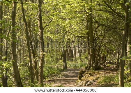 A Woodland view in Summertime