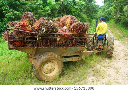 a worker with treller and palm oil - stock photo