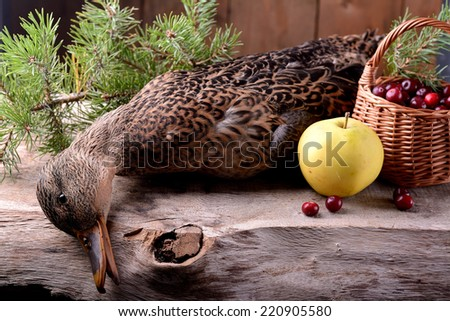 a wounded wild duck hunter on a wooden background - stock photo