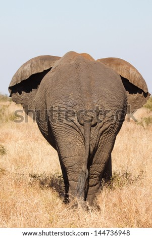 A wrinkly elephant backside - stock photo