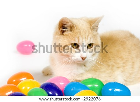 A yellow cat sits among plastic easter eggs on white background.