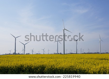 a yellow flowering rapeseed field with many windmills to generate electricity
