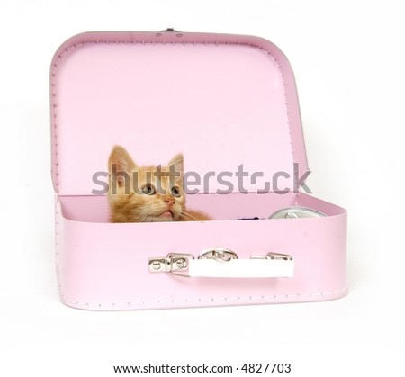 A yellow kitten sits inside a packed suitcase ready to go on a vacation or a trip.