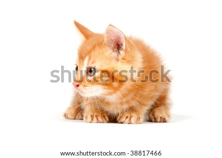 A yellow kitten sitting on a white background
