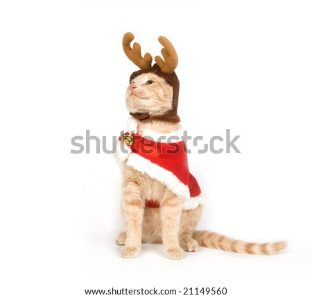 A yellow kitten with antlers and a red Christmas jacket on a white background - stock photo