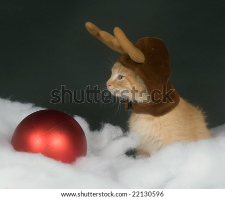 A yellow kitten with reindeer antler hat sitting in fake snow with a red Christmas ornament - stock photo