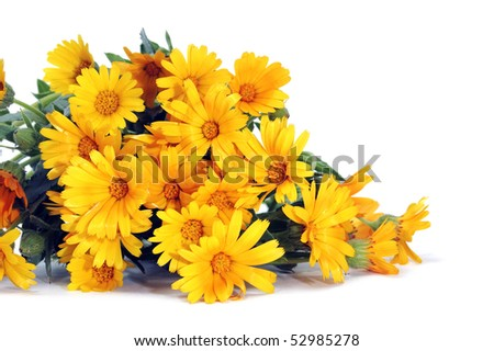a yellow wild daisies bouquet on a white background