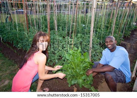 A young, attractive couple is crouching down and tending to plants in a garden.  They are smiling and looking at the camera.  Horizontally framed shot. - stock photo