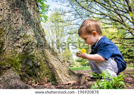 A young boy crouches near a tree looking at a twig in his hand while holding a dandelion flower in the other hand.   - stock photo