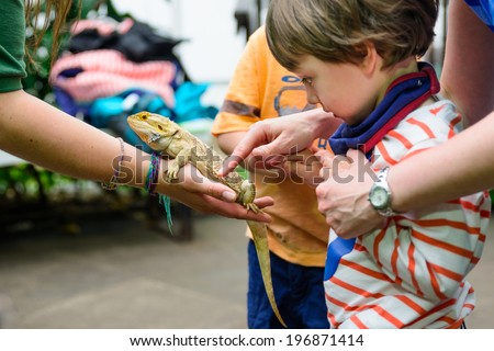 A young boy touching a bearded dragon at a zoo - stock photo