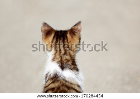 A young cat seating down and looking away - stock photo