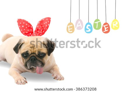 A young cute dog puppy Pug wearing Easter rabbit Bunny ears sitting next to a pastel colorful of eggs with copy space. - stock photo