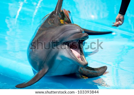 A young dolphin close-up - stock photo